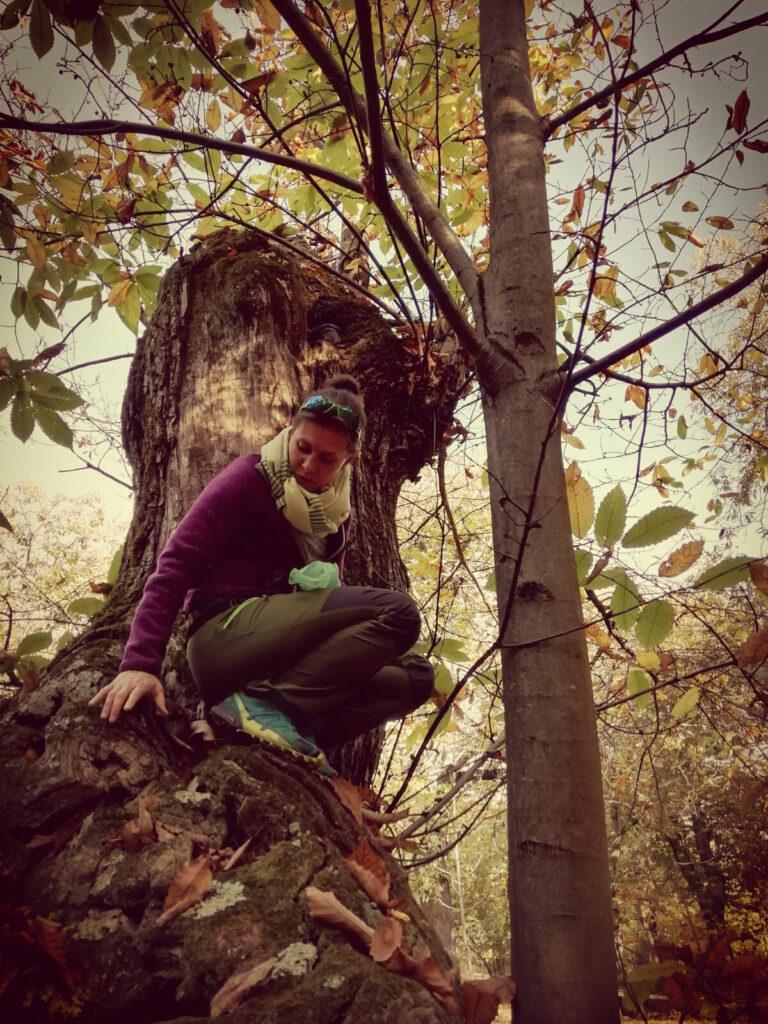 Gli alberi sono santuari