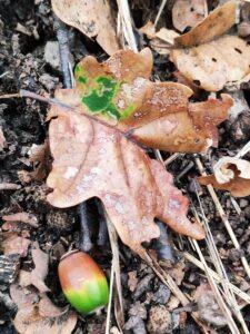 Texture autunno