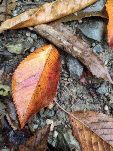 Foliage - orange
