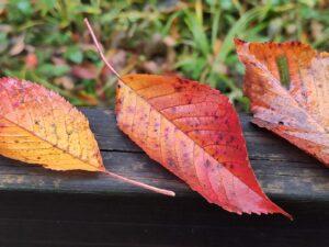 Tre foglie